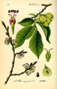 Los oloms dans Ecologia, natura olom-193x300